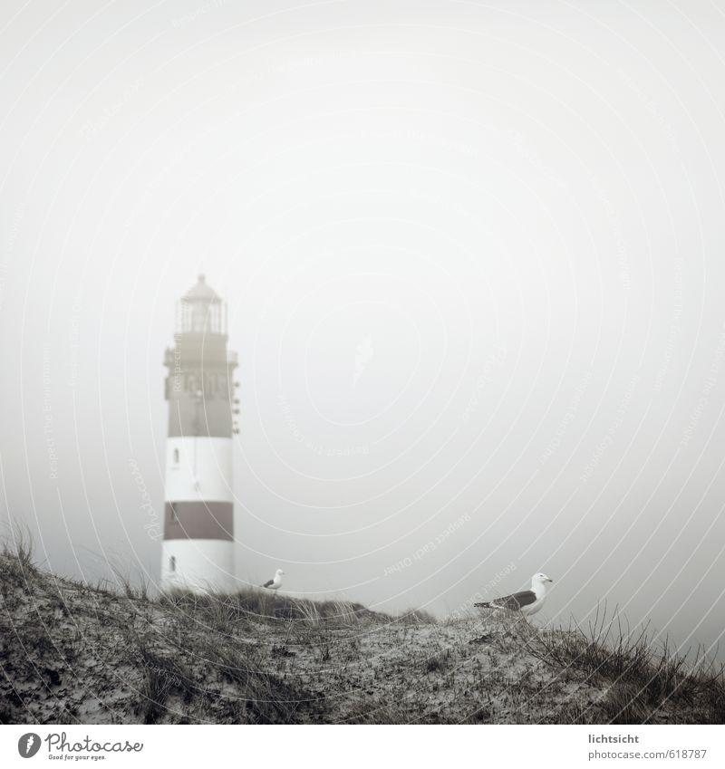 was gestern noch klar war Natur Landschaft Himmel Wetter Nebel Gras Küste Strand Nordsee Meer Insel Leuchtturm Sehenswürdigkeit Wahrzeichen Vogel 2 Tier grau