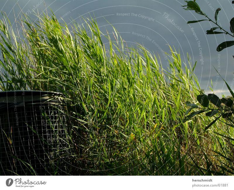 Grüne Mülltonne Müllbehälter Gras Sträucher Wolken dunkel Blatt grün Fass sonneneinstrahlung Kontrast