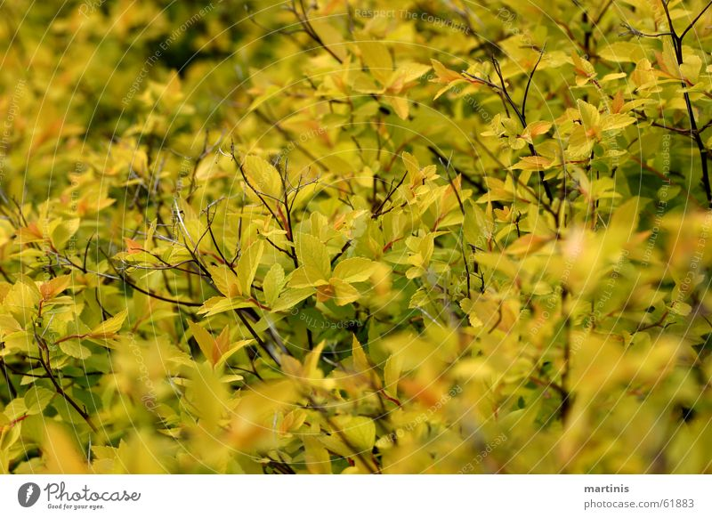 Et jrünt so jrün ... grün gelb Frühling Sträucher Tiefenschärfe sprießen