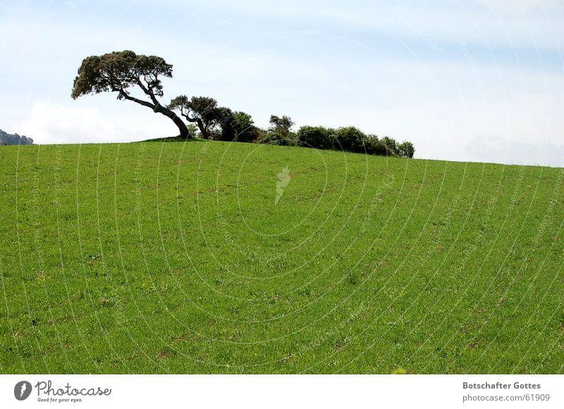 Sieh Dir den Wind an Baum grün Wiese Macht Italien stark Wegweiser Sardinien anpassungsfähig verwurzelt Windrichtung Korkeiche