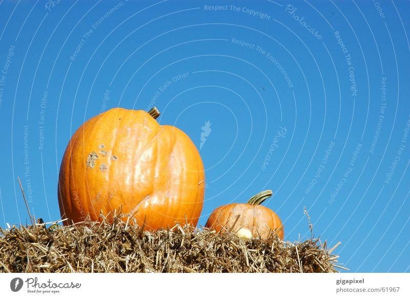 EIN Kürbis macht noch keinen Herbst ... Halloween Stroh Erntedankfest lecker 2 Außenaufnahme orange Himmel blau Ernährung paarweise