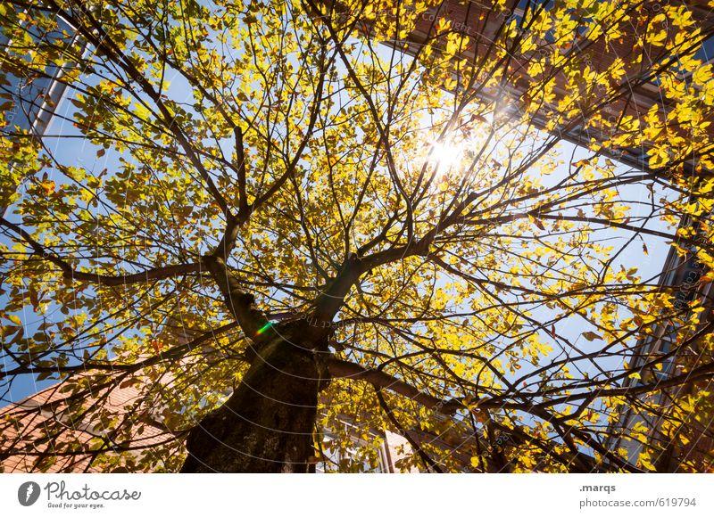 Sonne Umwelt Natur Wolkenloser Himmel Klima Schönes Wetter Baum Laubbaum Baumstamm Gebäude Wachstum Gesundheit gigantisch hell schön Wärme Stimmung himmelwärts