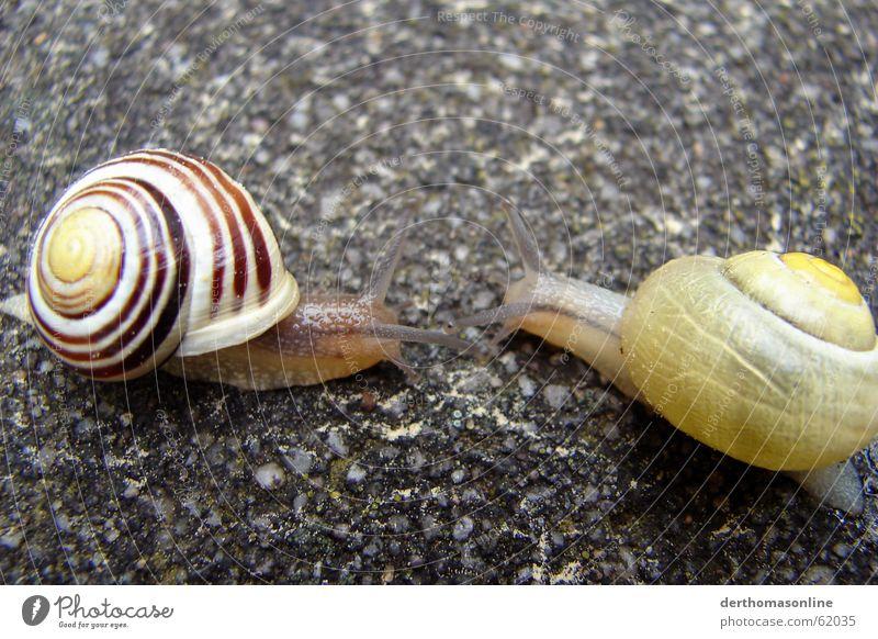 Speed-Dating Haus Auge nah Glätte Schnecke krabbeln langsam Steinboden