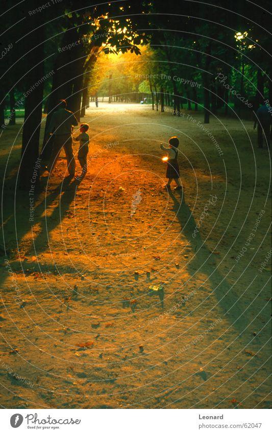 Sonnenuntergang im Park Mensch Baum Familie & Verwandtschaft Kind Mädchen Lichterscheinung Schatten sonnesonnenuntergang gold shade sun sunset tree child