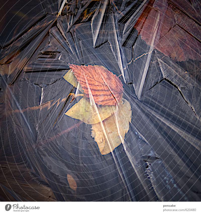 eiszeit II Natur Urelemente Wasser Winter Eis Frost Pflanze Blatt Teich Zeichen Design Eisblumen Eiskristall gefroren mehrfarbig Dekoration & Verzierung Eiszeit