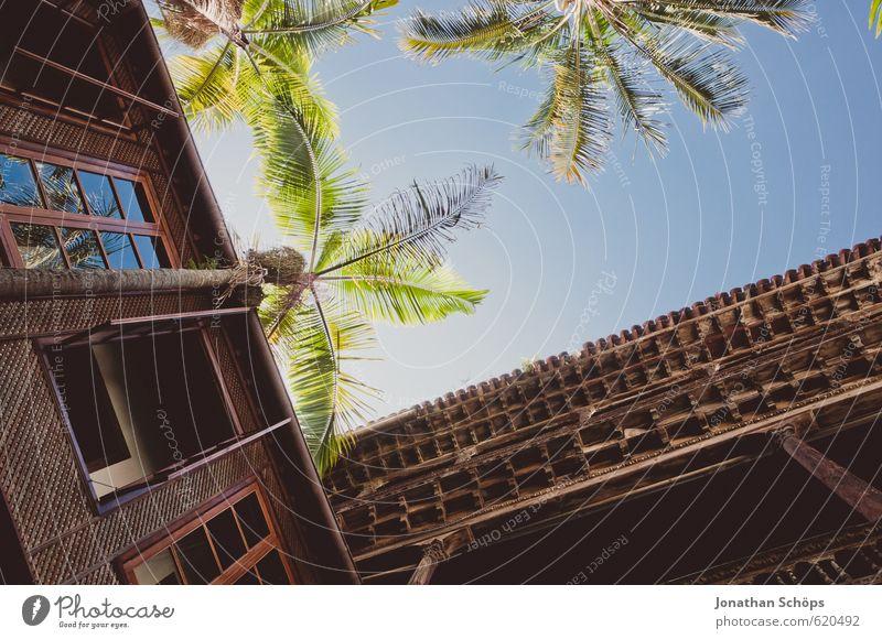 La Orotava / Teneriffa II Natur Ferien & Urlaub & Reisen blau grün Pflanze Sommer Erholung Wärme Reisefotografie Holz braun Fassade hoch ästhetisch genießen