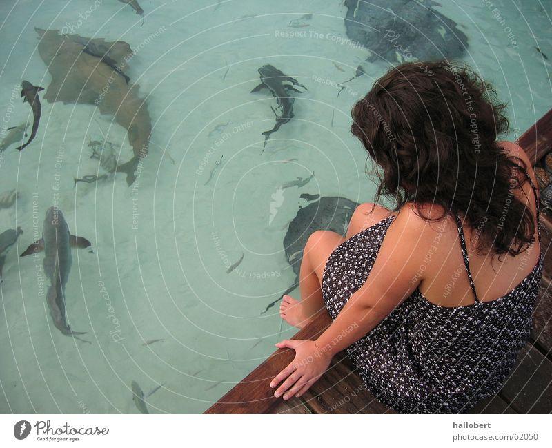 Malediven 03 Meer Haifisch Steg Frau Ferien & Urlaub & Reisen Strand Küste Wasser Fisch traumurlaub maldives traum urlaub