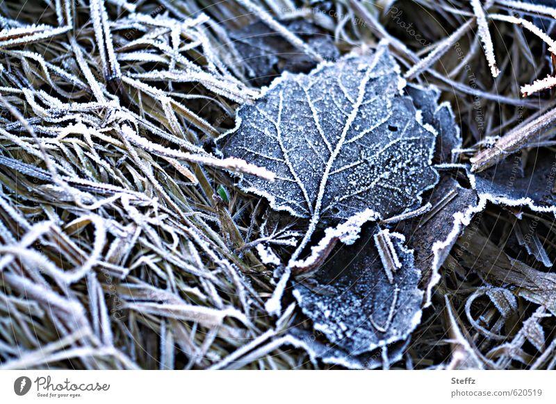 erster Frost Natur blau Pflanze Blatt Winter kalt Gras Wetter Eis trist Klima gefroren frieren Nostalgie Blattadern