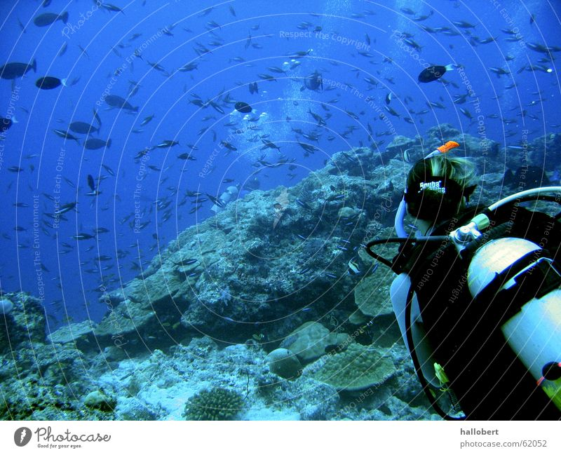 Malediventauchschule Meer Frau Taucher tauchen Riff Wassersport Fisch Unterwasseraufnahme traumurlaub