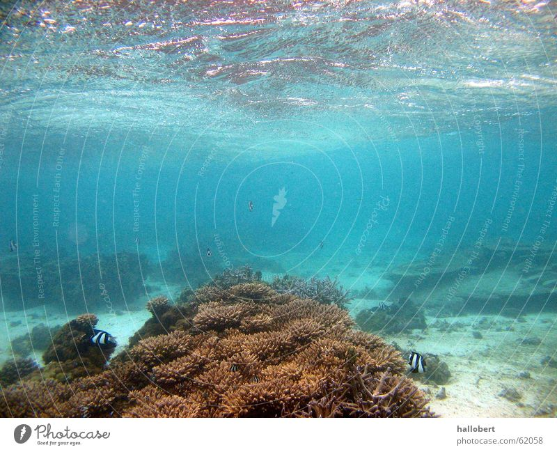 Schnorcheln auf Mauritius 01 Wasser Meer Unterwasseraufnahme tauchen Malediven Riff Schnorcheln