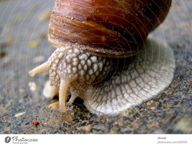 Weinbergschnecke Haus Geschwindigkeit Schnecke Schalen & Schüsseln krabbeln langsam Schneckenhaus Schleim Stielauge