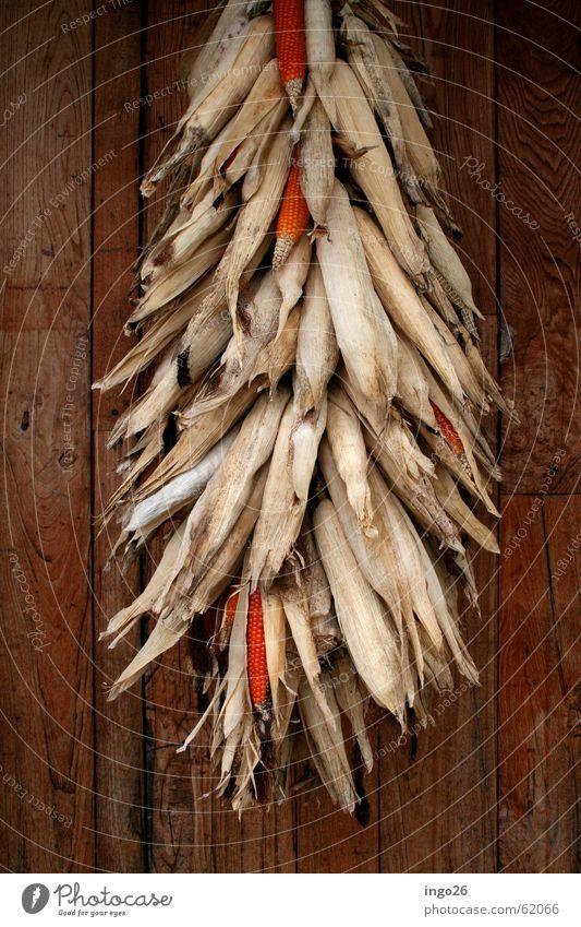 Maisbund Natur Wand Holz Italien Gemüse trocknen Bündel Mais Polenta