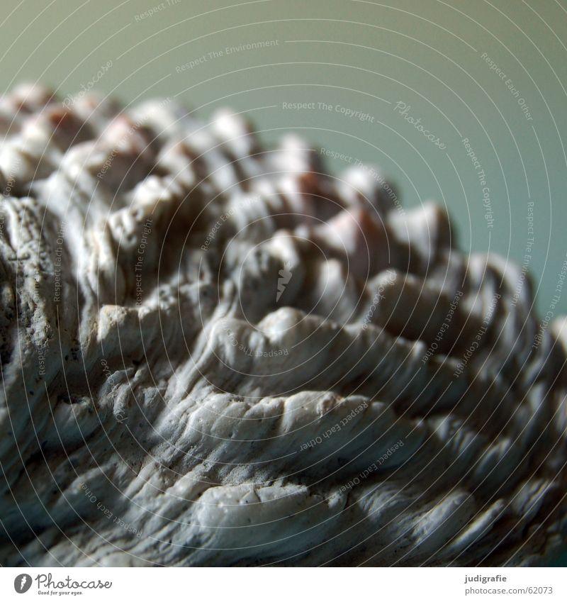 Seeohr 2 Schneckenhaus Muschel Kalk Meer rau grau Atlantik seeohr Strukturen & Formen Mittelmeer Schutz blau Leben Einsamkeit Schalen & Schüsseln