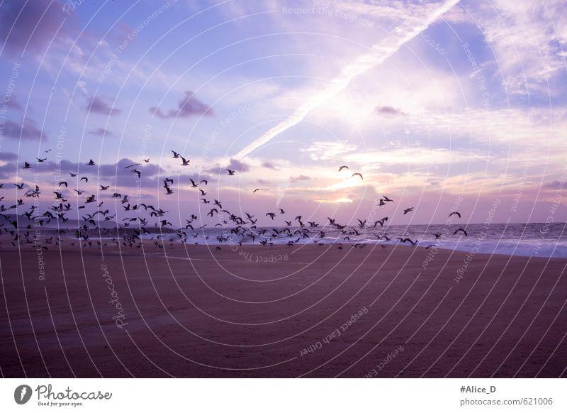 Möwenflug blau braun Stimmung Vogel orange Warmherzigkeit Flügel Romantik violett Schwarm