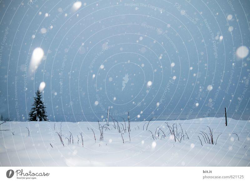 kometenhafter Schneefall Himmel Ferien & Urlaub & Reisen Baum Landschaft ruhig Winter kalt Berge u. Gebirge Umwelt Glück Feste & Feiern träumen Eis Tourismus