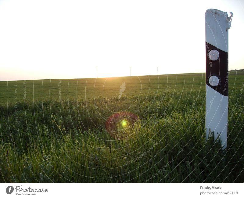 Abseits des Weges Sonnenuntergang Leitpfosten Straßenrand Wiese einzeln Wege & Pfade Freiheit Natur