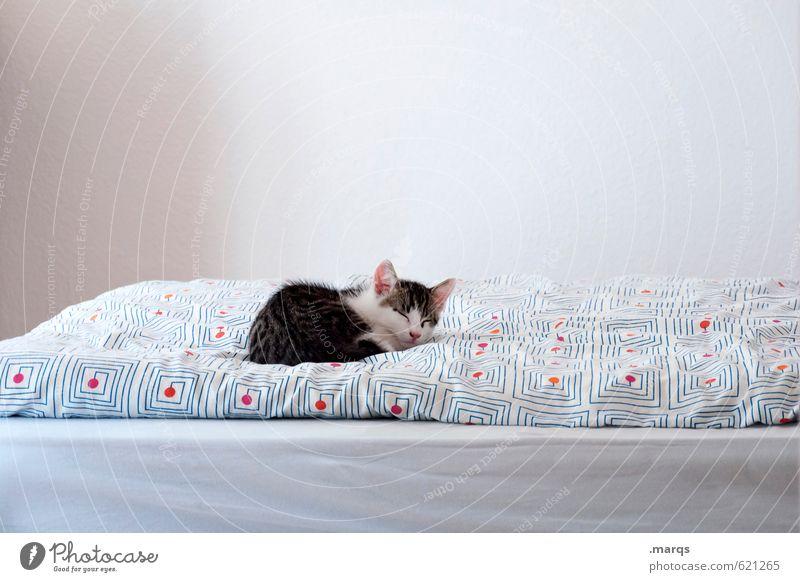 Kalle schläft aus Katze schön Erholung ruhig Tier Tierjunges klein hell liegen Wohnung Zufriedenheit niedlich schlafen Bett Haustier Geborgenheit