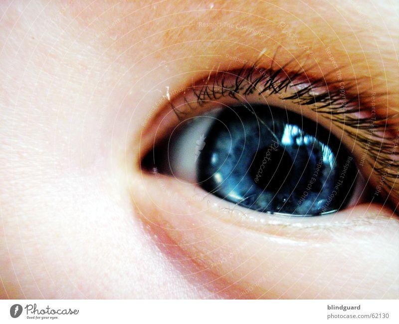 Augenblick Kind blau Freude Auge Leben Gefühle träumen Denken Baby glänzend groß Vertrauen Neugier Kleinkind Wimpern Geburt