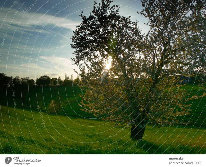 Landschaft baum Baum Wiese Licht grün Sonnenlicht Romantik Denken Himmel blau grass tree nachdenken