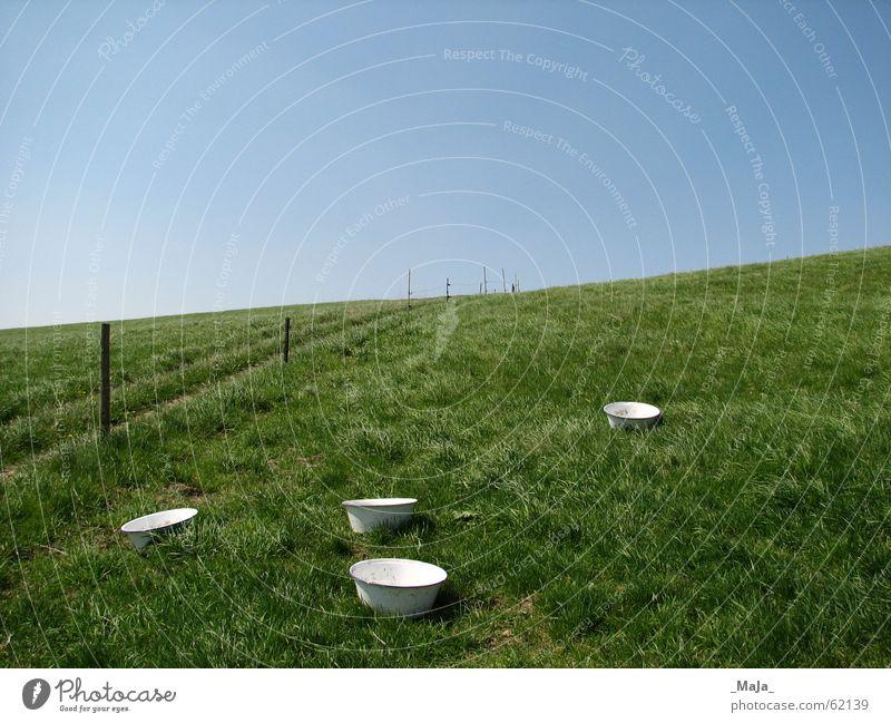 Weide Gras grün Zaun blau Himmel Schalen & Schüsseln Natur
