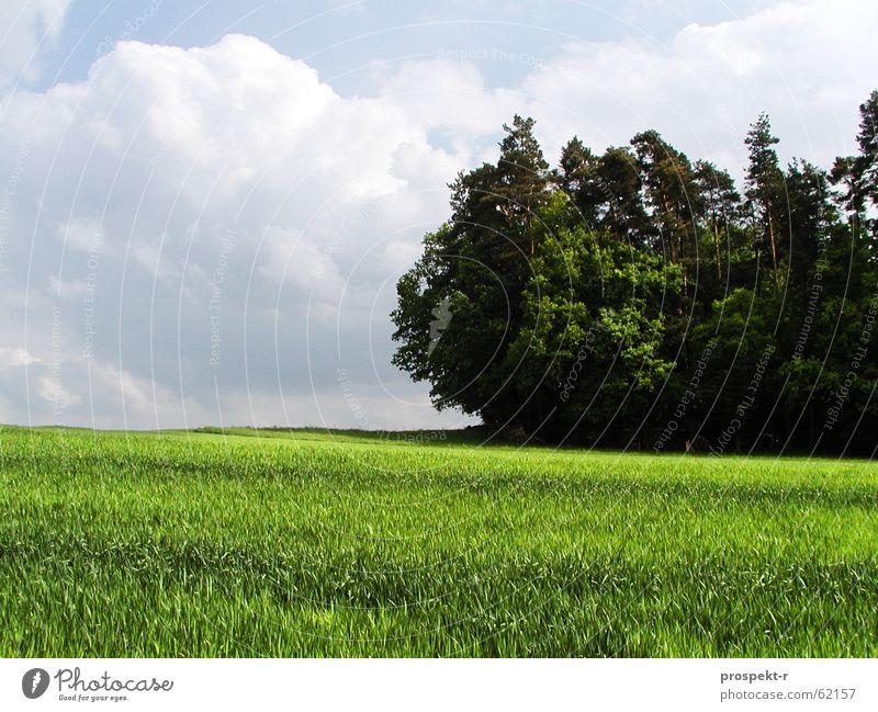 Bayrische Landschaft Wiese Feld Waldrand grün Ferne Wolkenhimmel weiß weiß-blau dunkel Himmel hell