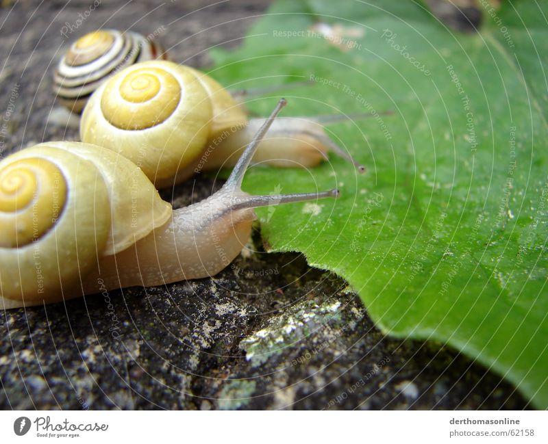 Schlecke grün Blatt Haus Auge gelb Ernährung Erde Beginn 3 Erfolg frisch Bodenbelag Ziel dünn lecker Ekel