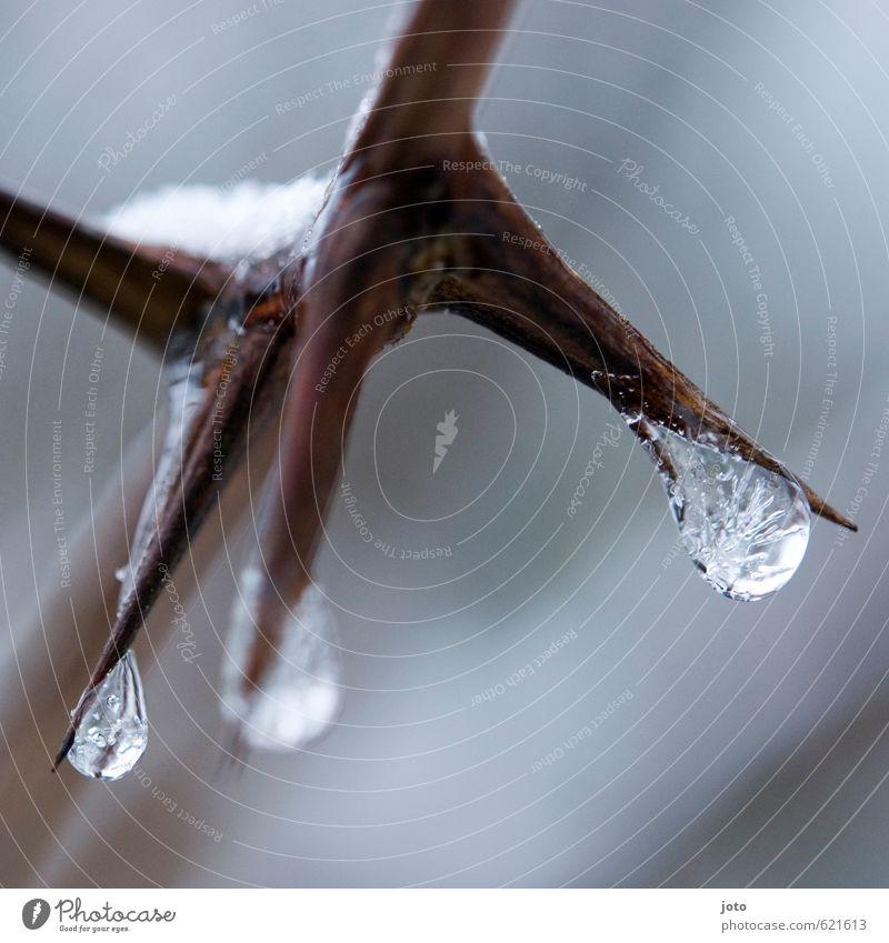 freeze Natur weiß Wasser ruhig Winter kalt Schnee Eis Kraft Sträucher Wachstum nass Wassertropfen Spitze Vergänglichkeit Ast