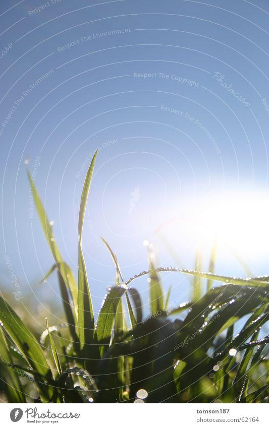 frühtau Sonne Sommer Wiese Wassertropfen Seil Tau