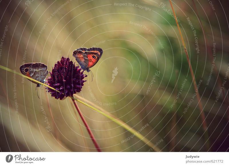 Partnerarbeit Abenteuer Sommer Sommerurlaub Sonne Umwelt Natur Frühling Schönes Wetter Wärme Pflanze Blume Gras Sträucher Blüte Schnittlauch Tier Schmetterling