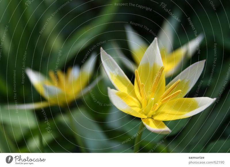Beautiful Nature schön Blume grün Pflanze Freude Blüte Frühling Garten