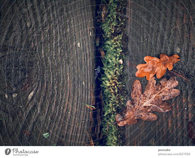 outled Natur Urelemente Erde Herbst Winter Moos Blatt Seeufer Holz Zeichen ästhetisch authentisch Duft dunkel einfach nah nass natürlich feminin grün rot