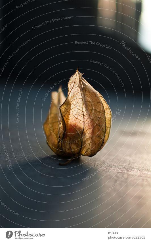 Obstperle Natur Pflanze schön Gesunde Ernährung schwarz Umwelt gelb Essen grau Lebensmittel Frucht orange leuchten gold Kraft Warmherzigkeit
