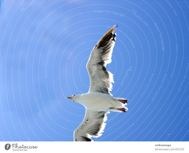 möwe im blauen Himmel blau Wolken Freiheit fliegen frei Flügel unten Möwe Albatros