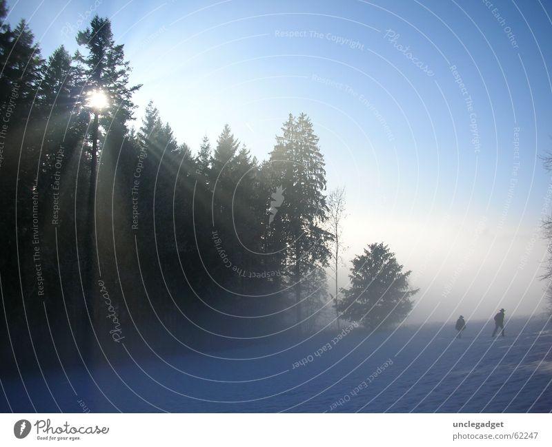 Aus dem Nebel... Baum Sonne blau Winter Wald Schnee Kraft wandern Schweiz Tanne Strahlung anstrengen Schneelandschaft Zürich