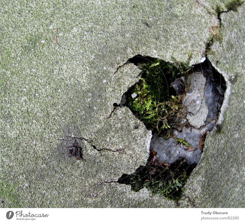 the ground is broken grün blau Gras Freiheit grau Beton Bodenbelag kaputt gebrochen Material Siebziger Jahre Reaktionen u. Effekte Selbstständigkeit Untergrund