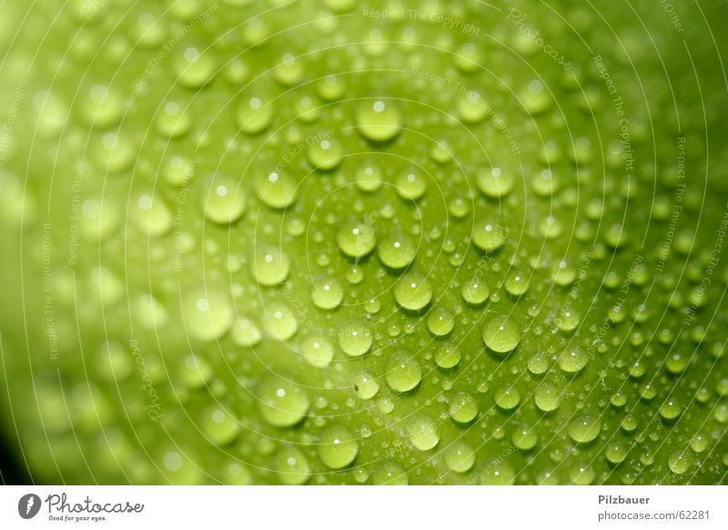 Tropfen grün Blatt Zoomeffekt Pflanze Wassertropfen Makroaufnahme Nahaufnahme Garten Natur