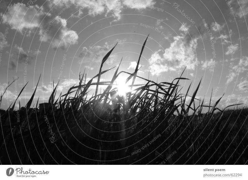 einfach mal schwarz-weiß weiß Sonne schwarz Wolken Gras Landschaft