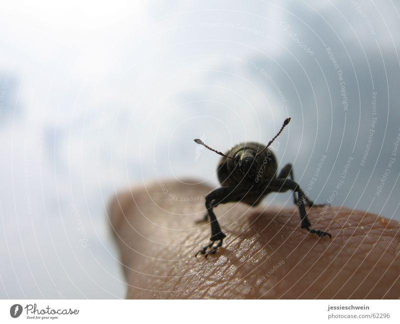 """fliege junger """"Käfer"""" hinaus in die Freiheit... Finger Zeigefinger Ferne Wolken Fühler beatle Beine Himmel"""