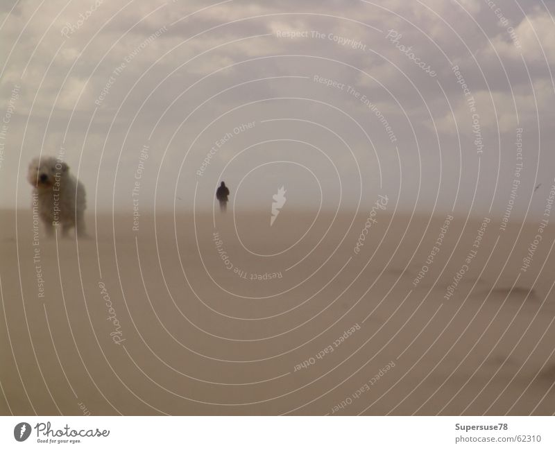 Steife Brise Mensch Mann Strand Wolken Tier Hund Sand Wind Sturm