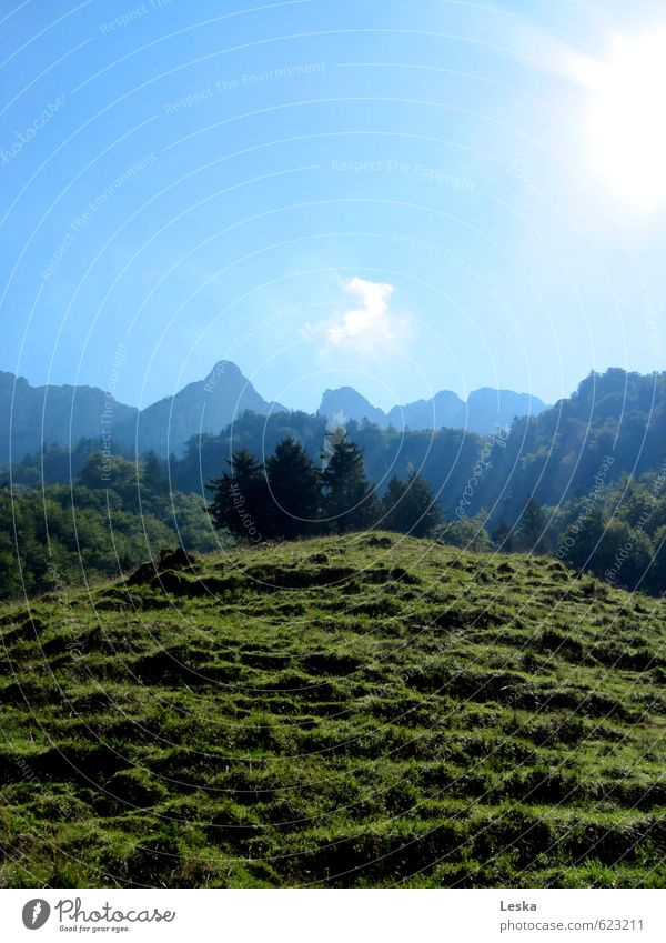 Bergwelten 2 Himmel Natur blau grün Pflanze Sommer Sonne Baum Landschaft Ferne Berge u. Gebirge Wiese Gras Erde Schönes Wetter Gipfel