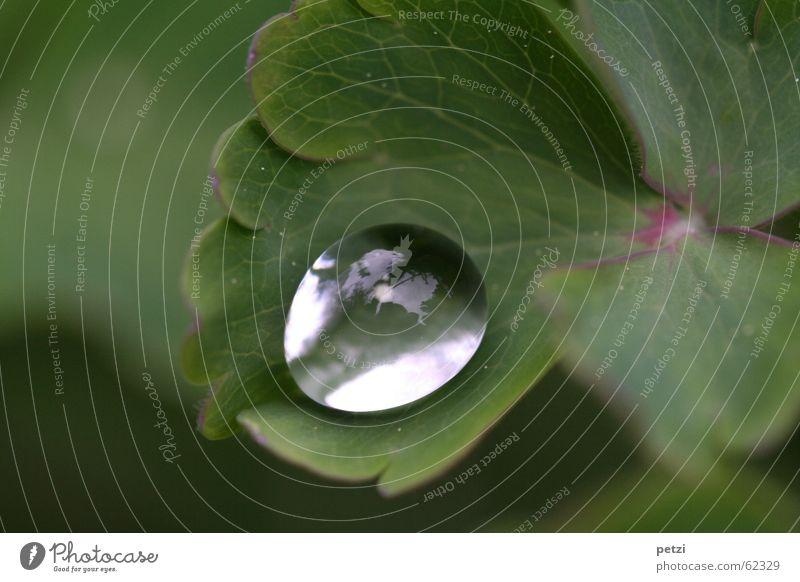 Perle aus Tau Seil Pflanze Wasser Wassertropfen Himmel Blatt glänzend rund grün durchsichtig schimmern gefächert Farbfoto Außenaufnahme Menschenleer