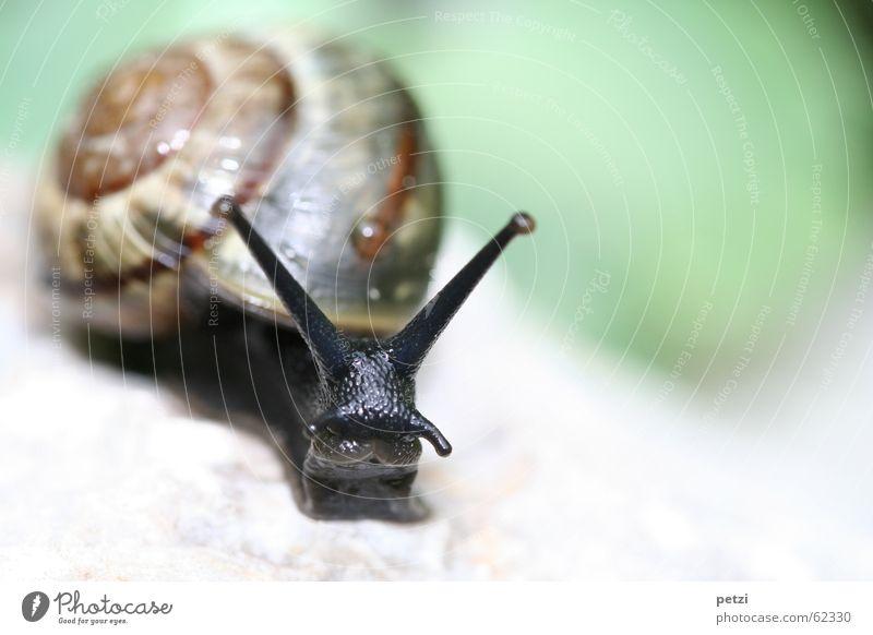 Wo gibt es etwas grün... schwarz Auge Tier Garten Mund Wassertropfen Suche süß Schnecke Fühler ausgestreckt lieblich schleimig Schneckenhaus Weichtier Tentakel