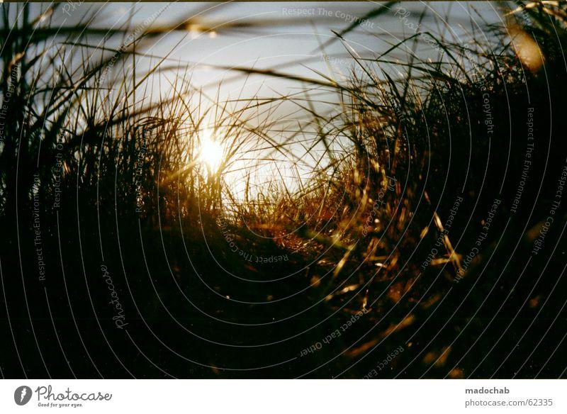 GRAS | sonnenuntergang kitsch romantik natur nature schön Natur Sonne Erholung Wärme Wiese Wege & Pfade Gras Energiewirtschaft Romantik Hoffnung Ziel Sehnsucht