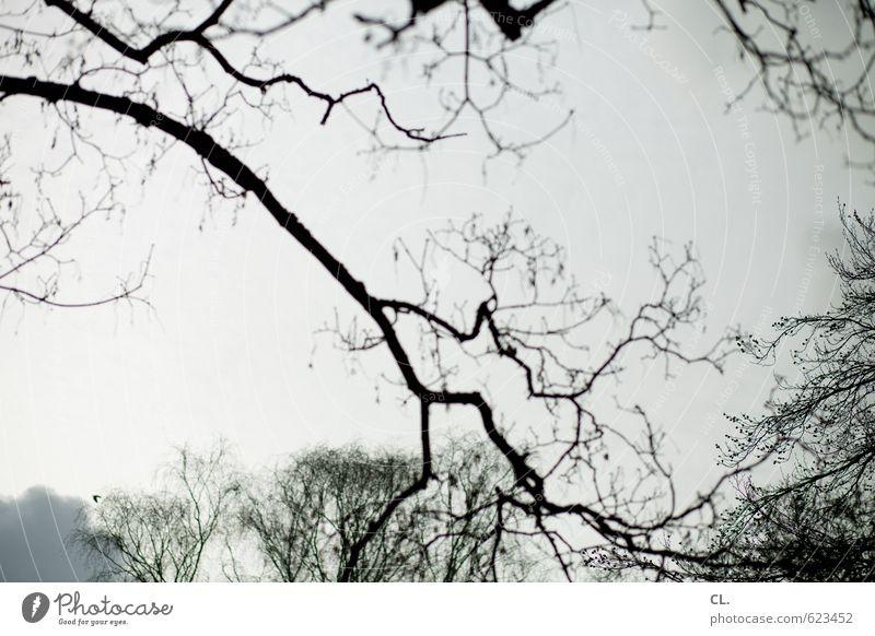 luftikus Umwelt Natur Landschaft Himmel Wolken Herbst Winter Baum Park Wald grau Traurigkeit Fernweh Einsamkeit kalt Ast Wachstum Gedeckte Farben Außenaufnahme