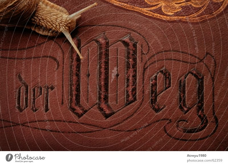 der Weg alt Tier dunkel Buch Geschwindigkeit Schutz edel Schnecke Fühler krabbeln Bibel langsam schleimig Schneckenhaus Weichtier Weinbergschnecken