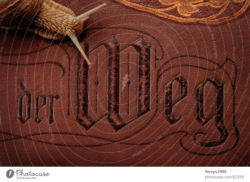 der Weg Fühler Weinbergschnecken Schneckenhaus schleimig krabbeln langsam Geschwindigkeit Tier Buch Bibel dunkel Schutz Weichtier atreyu alt edel