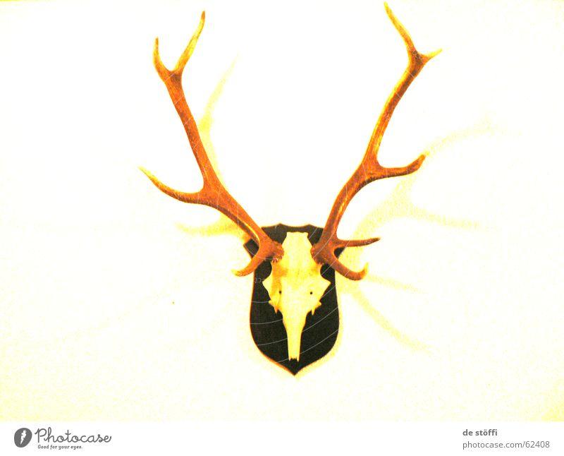 de höörsch gelb Farbe Wand Stil Tod Wohnung Horn Hirsche Skelett Wanddekoration