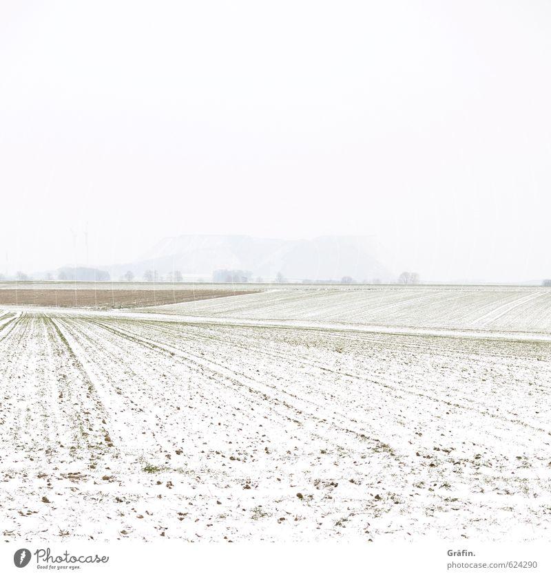 Wetter | Heiter bis neblig Landschaft Erde Winter schlechtes Wetter Nebel Schnee Feld Hügel kalt braun weiß Einsamkeit Klima Natur Umwelt unsichtbar Farbfoto