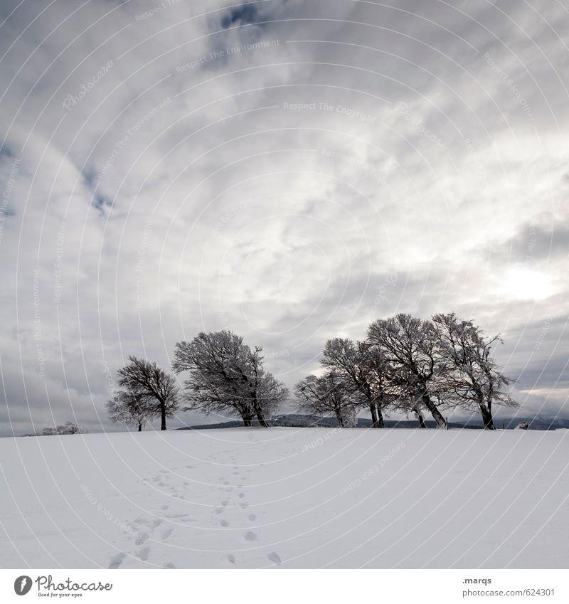 Nachzügler Himmel Natur schön Baum Landschaft Wolken Ferne kalt Gefühle Freiheit Stimmung Klima Ausflug Abenteuer Frost Buche