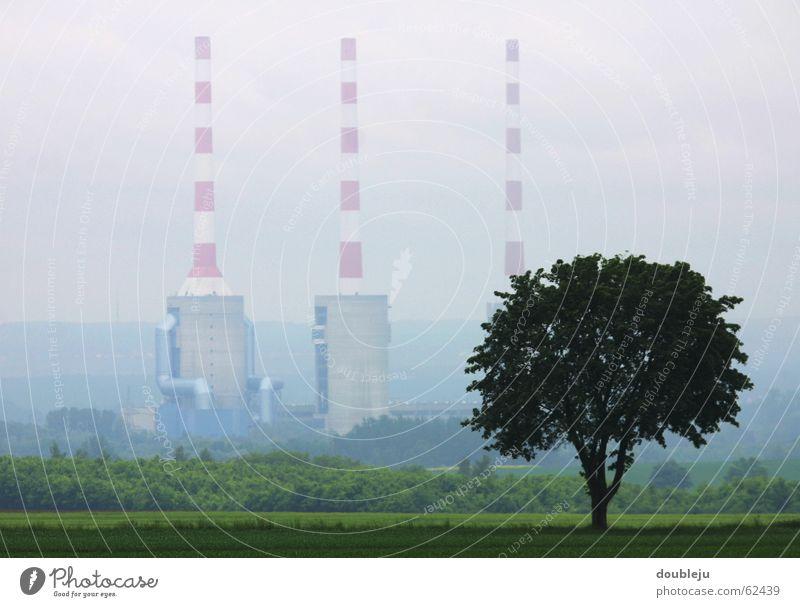 industrie gewächs Baum Industriefotografie Fabrik Schornstein trüb bedecken